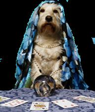 psychic-dog_225px